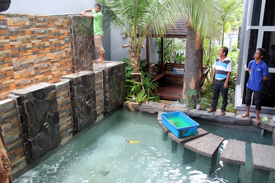 Aquatic Paradise Beautiful Newly Completed Koi Pond