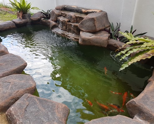 Aquatic paradise koi pond specialist for Fish pond specialists